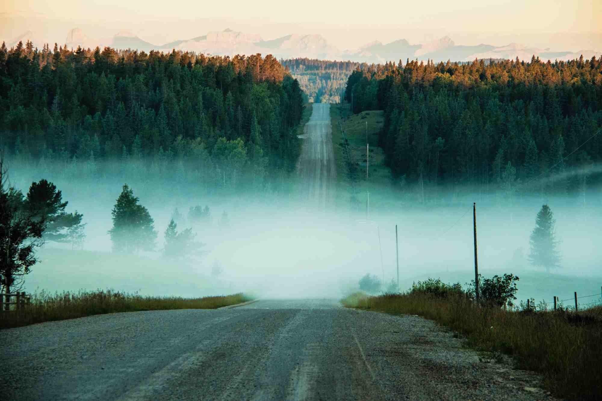 Weg met mist